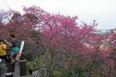 Nago Cherry